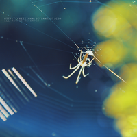 .spider by freezinka
