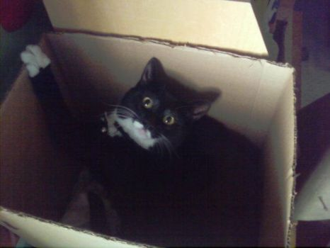 Cat in the box by Gatubellina