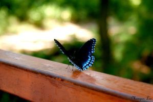 Butterfly Away by morganlee8
