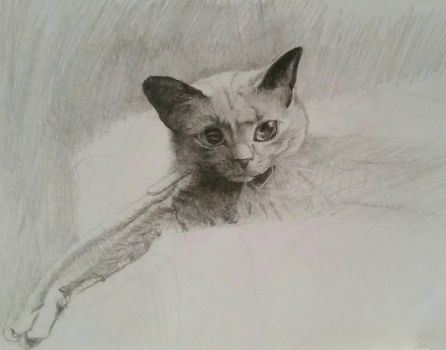graphite sketch of Tweed  by TheeIceFaerie