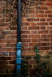 Pipes and Vines by wackymanda