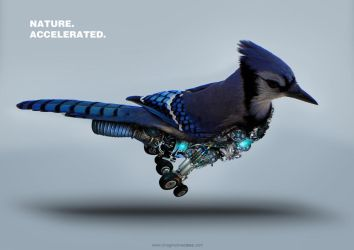 Accelerated Bird by squiffythewombat