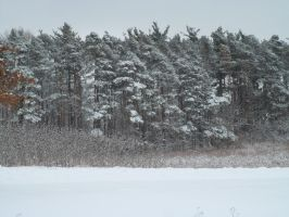 A Kings Forest Winter by Melanie76