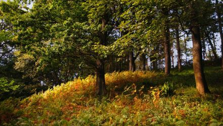 Yellowcraig Wood by younghappy