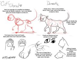 Cat Tutorial: Domestic by modesty