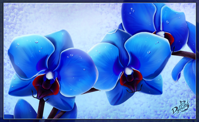 Blue Orchids by Dyewind