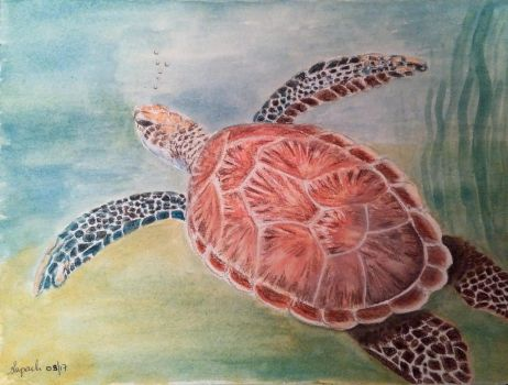 Sea Turtle by Supach