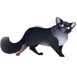 Cinderpelt by Whitefeatherink