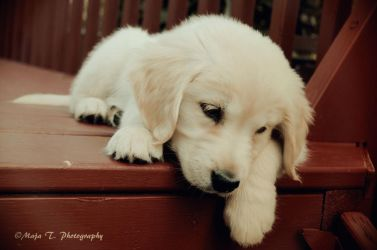 After playing I get so tired... by TheLittleMaja