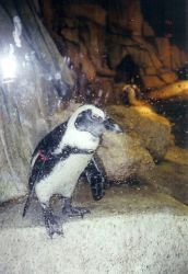 a penguin at the zoo by nemele