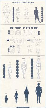 Anatomy Basic Shapes by Azot2018