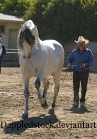 removed tack andalusian by suuslovertje
