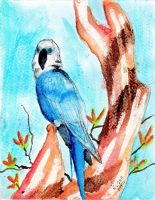 Spix Macaw - Watercolor by Vampiric-Conure