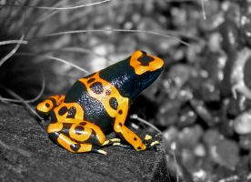 Bumblebee Poison Frog by FauxHead