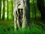 Carved tree in woods by Elerononra
