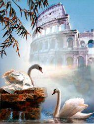 Swan pair and the Acropolis by spiesen