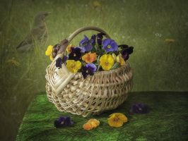 Spring basket by Daykiney