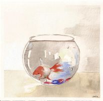 fish in bowl by throwafuse