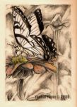 :Butterfly: by YoukaiYume