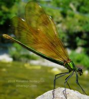 Dragonfly Calopteryx green by Othersign
