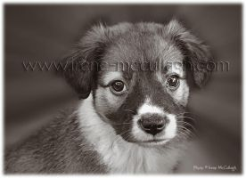 Puppy in Sepia by substar
