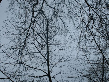 Tree Branches 2 of 3 by stacieyates