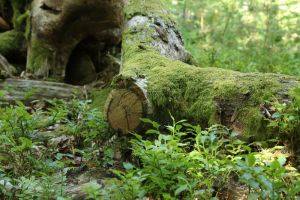 Mossy log Stock 16 by Malleni-Stock