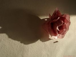 lunds first rose by sommerstod