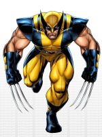 Art Adams Wolverine by JPRart