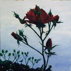 Oil painting of a rose by intipcori