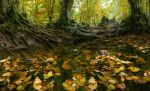 The Forest River by borda