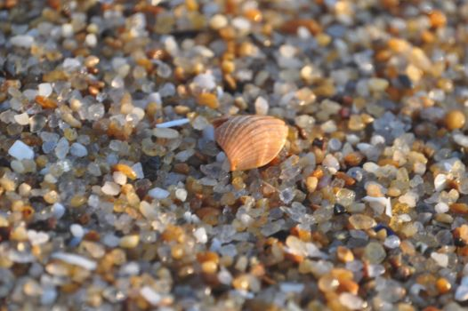 Seashell on the Beach by ticklemeimsexy
