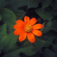 Little flower by leoatelier