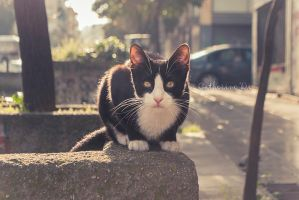 Morning Kitty by Catherine-Di