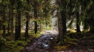 Under the shade of the forest by kriskeleris