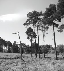 Ashdown forest by spurs06