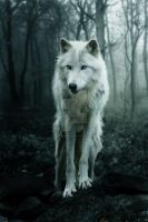 The White Wolf by JulieLangford