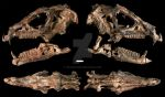 A Sabre-Toothed Dinosaur Skull by Qilong