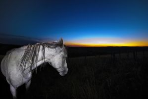 Sunset Horse - NEJMA by bulgphoto