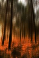 Fire in the Woods by carlosthe