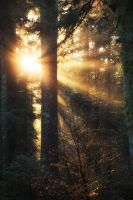 Light my Forest by FlorentCourty
