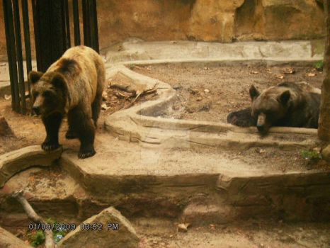 Bears by AngelTHdeLioncourt