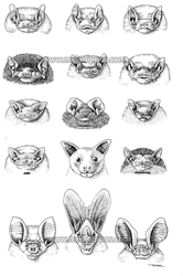 Fifteen Bat faces by melanippos
