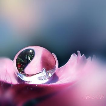 My pink drop... by hikingboots
