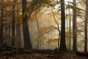 Beech paradise by aw-landscapes