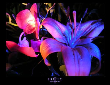 EXOTIC - PART I by OneBloomPhotography