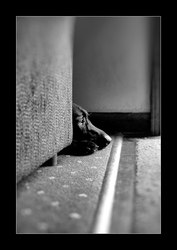 Hiding out by MichelleMarie