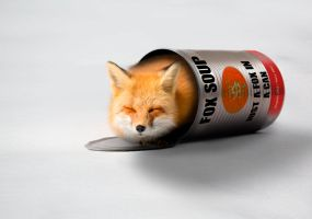 -- A fox in a can -- by 0l-Fox-l0