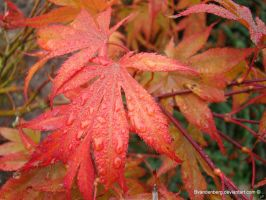 red leaves with raindrops by babsartcreations