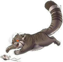 Manul by Husgryph